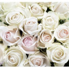 Фотообои виниловые на флизелиновой основе Decocode Белые розы 31-0412-FE 3х2,8 м