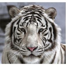 Фотообои виниловые на флизелиновой основе Decocode Белый тигр 31-0006-NB 3х2,8 м