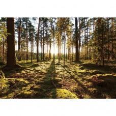 Фотообои виниловые на флизелиновой основе Decocode Прогулка по лесу 41-0416-PG 4х2,8 м