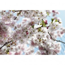Фотообои флизелиновые Komar Spring 8NW-507 3,68х2,54 м