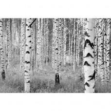 Фотообои флизелиновые Komar Woods XXL4-023 3,68х2,48 м