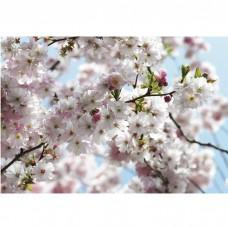 Фотообои бумажные Komar Spring 8-507 3,68х2,54 м